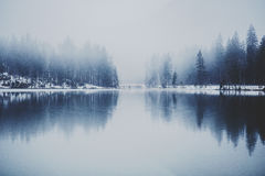 White Fog over Trees Lining Lake Royalty Free Stock Images