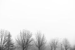 White foggy landscape sky with winter trees Royalty Free Stock Photography