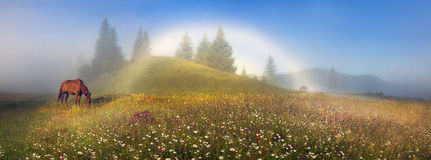 White foggy rainbow. In the mountains you can see the happy symbol- rare natural yavlenie- white foggy rainbow- special kind of halo. Occurs when the projection Royalty Free Stock Image