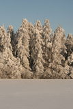 White forest Stock Images