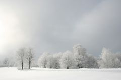 White forest. Beautiful foggy winter day when sun started to come out of the clouds Stock Photos