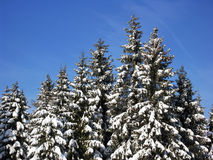 White Forest Stock Photography