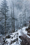 White forest Royalty Free Stock Photo