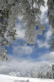 White forest Royalty Free Stock Images