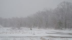 A path between trees covered falling snowflakes with snow. White forest covered with snow path between trees covered falling snowflakes stock footage
