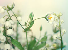 White forest flowers Royalty Free Stock Image