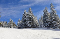 White forest landscape Royalty Free Stock Photo