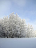 White forest under the blue sk. Forest, covered by the snow and the blue sky Royalty Free Stock Images