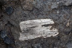Fossil wood fragment in volcanic tufa. White fossil wood fragment in volcanic tufa Stock Images