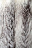 White fox fur texture or background Royalty Free Stock Photos