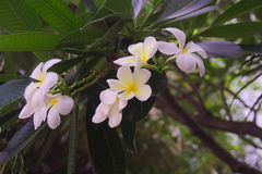 White fragini. In the park on cloudy day royalty free stock photos