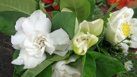 White and fragrant Gardinia flower stock photo