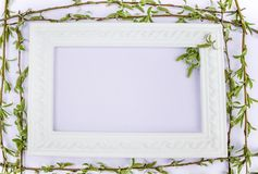 White frame with branches of green willow on a pink background. Copy space in the middle for your text. Willow twigs stock photography