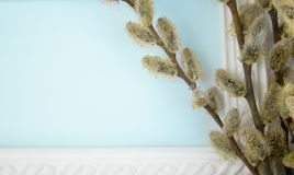 White frame with branches of yellow willow buds on a green background. Copy space in the middle for your text. Willow twigs royalty free stock image