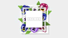 White frame with colorful pansy flower and green leaf. Realistic vector illustration for spring and nature design, banner with square frame Stock Image