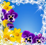 White frame and flowers Stock Images
