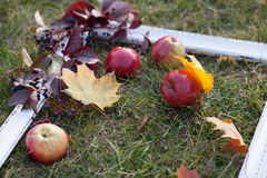 White frame on the grass with apples, grapes and leaves. Horizontal Royalty Free Stock Images