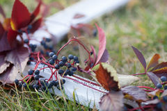 White frame on the grass with grapes. Horizontal Royalty Free Stock Photos