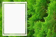 White frame on green background Stock Image