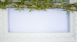 White frame with green willow branches on a white background. Copy space in the middle for your text stock images