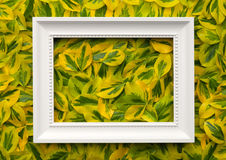 White Frame with Leaves for Background Stock Image