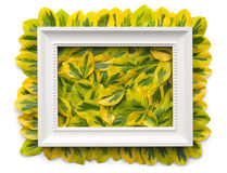 White Frame with Leaves Isolated on White Background Royalty Free Stock Images