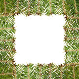White frame made from green christmas tree Stock Photos