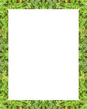 White Frame with Nature Borders. White frame background with decorated design borders Stock Photography