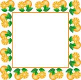White Frame Of Oranges Stock Image