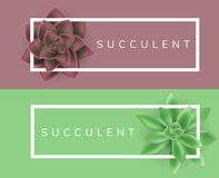 White frame with red and green succulent plant. White frame for text, with red and green succulent plant. Vector illustration for nature design, horizontal Stock Image