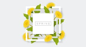 White frame with yellow dandelion flower and green leaf. Realistic vector illustration for spring and nature design, banner with square frame Royalty Free Stock Photography