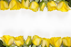 White frame with yellow rose on white background Stock Image