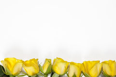White frame with yellow rose on white background Royalty Free Stock Photo