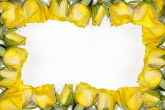 White frame with yellow rose on white background Royalty Free Stock Photography