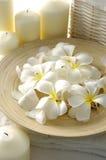 White Frangipani Royalty Free Stock Photography