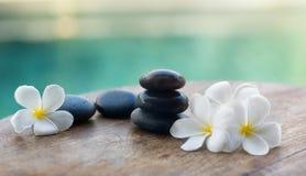 White frangipani with black stones Stock Photos