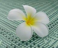 White frangipani flower on mat Royalty Free Stock Photos