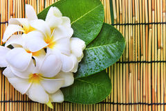 white frangipani flowers bouquet and green leaves with fresh water dew on bamboo mat textured background use for beautiful nature stock photo