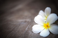White frangipani flowers on brown wood texture w royalty free stock photography
