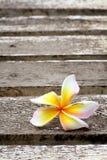 White frangipani flowers. On old wood Royalty Free Stock Photo