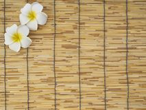 Frangipani set on bamboo table. White frangipani flowers placed on bamboo background, top view, space for text stock image