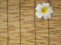 Frangipani set on bamboo table. White frangipani flowers placed on bamboo background, top view, space for text stock photo
