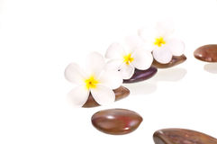 White frangipani flowers on red zen stone Stock Images
