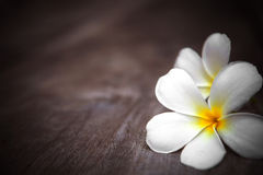 White frangipani flowers on wooden background with shallow depth of field Stock Photos