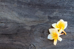 White Plumeria on old wood Royalty Free Stock Photography