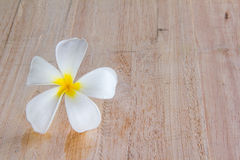 White frangipani on wood Royalty Free Stock Image