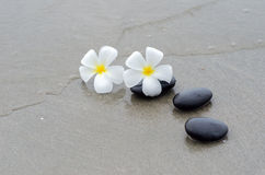 White frangipani and zen stone Stock Image