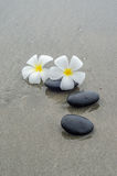 White frangipani and zen stone Stock Photo