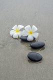 White frangipani and zen stone Stock Photo