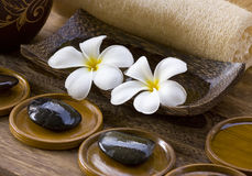 White frangipani with zen stone Stock Image